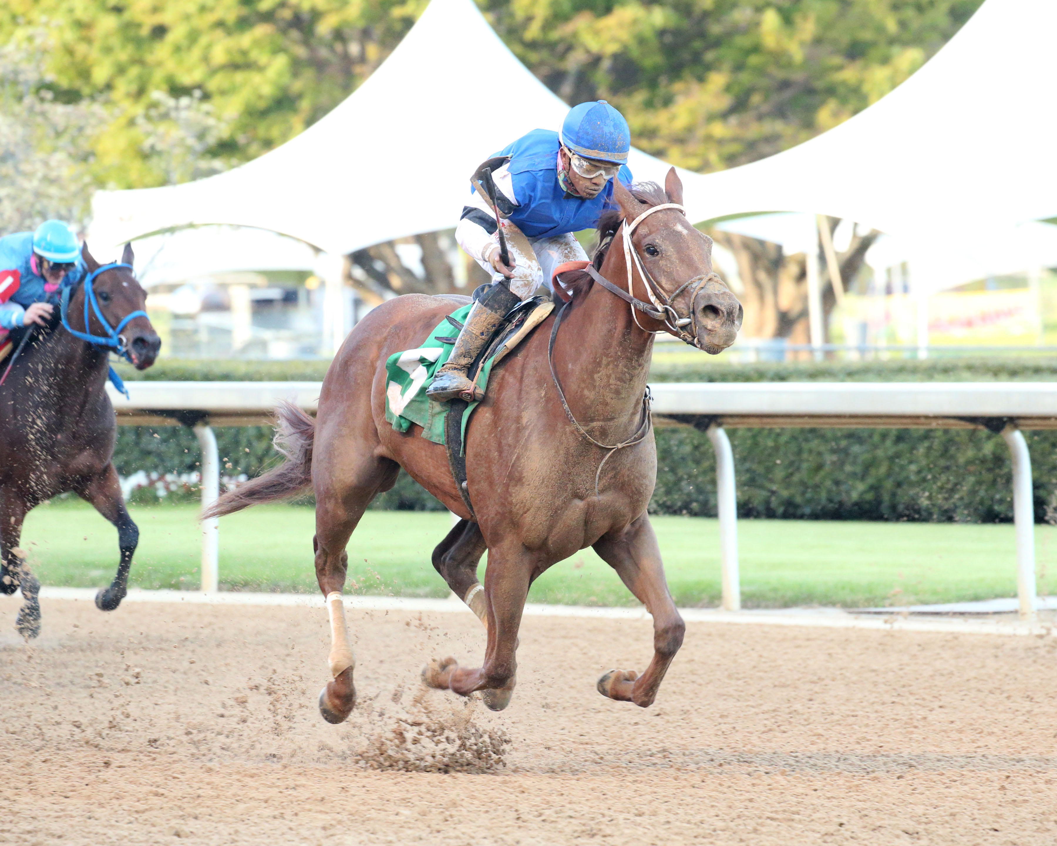 BIG ON BROADWAY FAVORED IN RAINBOW MISS